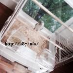 【セキセイインコのゲージ】飼い主も鳥も喜ぶ透明な鳥カゴ