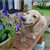 【ペット】飼いたい人気ランキングの犬種と飼いやすい犬は違う?