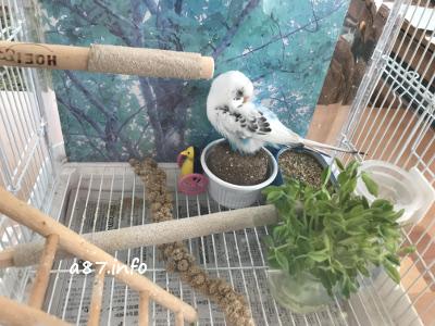 セキセイインコの鳥かご