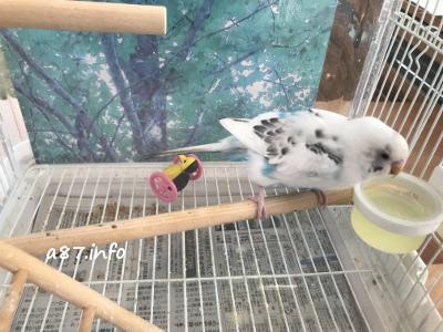 動物病院で指導された後の鳥かご